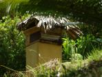 JP bee's providing our honey and helping the gardens flourish