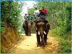 Elephant trecking