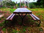 Picnic Table - Backyard
