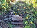 Steps to one of the orchards on the property