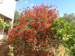 May at VILLAROSA