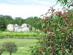 Summer Cherry Views