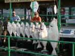 what can you say about homer (HALIBUT)
