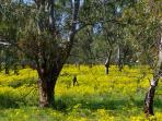 Prolific birdlife and beautiful gum trees