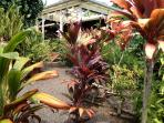 Tropical garden view to gazebo