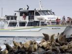Seals Phillip Island