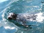 Meet the locals! The friendly grey seals have their pups on the local beach, A Magical sight!