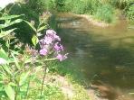 Enjoy the Flowers along the Creek