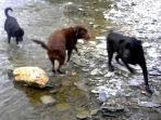 Everyone Loves A Splash In The Creek!