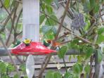See the humming bird drinking on the right?