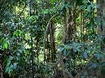 Rainforest along walking-trail at Daintree Valley Haven