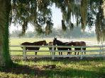 Ocalas famous horse farms
