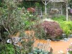 Frogs in outdoor pond  - rivet, rivet