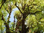 Beautiful trees capture sunlight and provide shade for picnics