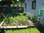Garden in back yard (much larger now)
