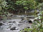 stunning rainforest tracks and creeks to explore