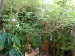 Room #5 at Casitas Kinsol - Tucked under an 'Umbrella' tree
