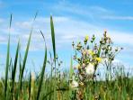 Wildflowers on Duck Lake Peninsula.