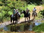 A horse back ride through the countryside