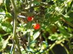 Pick some Cherry tomatoes for your salad, they are taaasty!