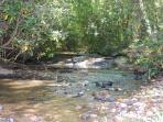 Rushing Creek through the back yard
