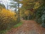 Scenic Drive/Walk