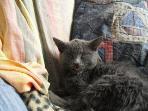 our cat 'Brac'