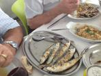 Fresh Sardines From the Sea