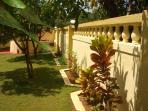 Mango trees in the gardens