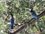 FREE birdseed provided for Stellar Blue Jays, & More