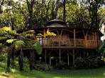 Gorgeous tropical vegetation and the sound of song birds brings true peace to your vacation