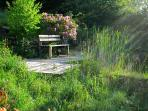 Bench at the Pond