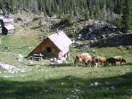 Dedno polje - The mountain pasture