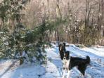Attention all dogs. Tell your 2 legged companions that you love to romp in the snow too!!