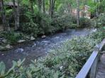 Goshen Creek running beside cabin