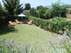 Garden with lavander