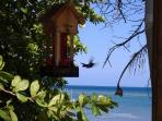 Lara's Dream - humming bird from the deck