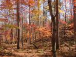 See the true colors of the forest in full fall foliage.