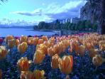 Springtime on English Bay