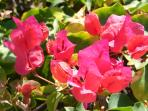 Flowers all around the island of Oahu!