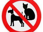 Sorry, no pets