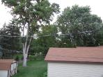 You see this tree from back windows