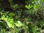 Pavilion, garden area