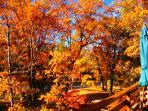 Beautiful Fall Colors at Chalet Devora