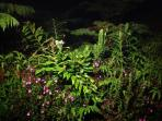 Night time garden view