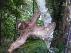 Sloth in the property/paresseux dans la propriété