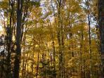 Sunset lights shining through the trees!