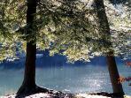 Walk to Lake at State Park