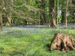 Bluebell Woods also 2 mins from us