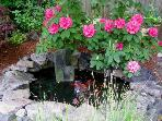 Backyard fish pond with water feature,  Come help us feed the fish.